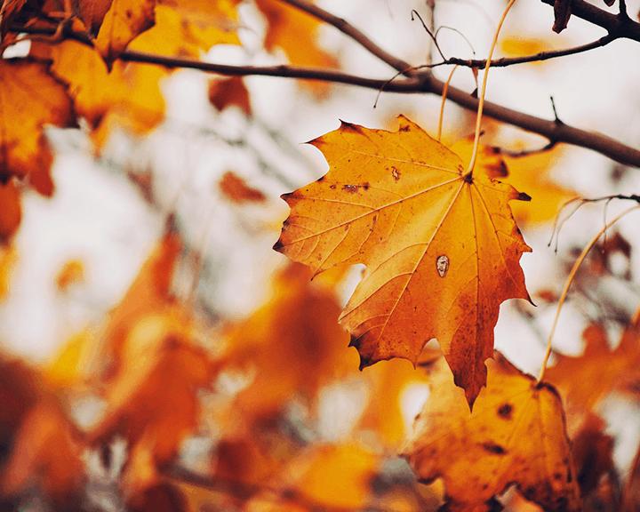 7 Tendencias de decoración para otoño